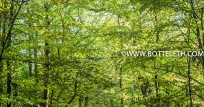 bottelethPhotography-2017-6110