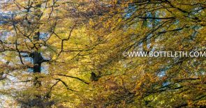 bottelethPhotography-2017-6283